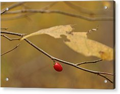 Berry Acrylic Print by Mark Russell