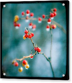 Berry Nice - Red Berries - Winter Frost Icy Red Berries - Gary Heller Acrylic Print by Gary Heller