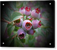 Berry Unripe Acrylic Print by MTBobbins Photography