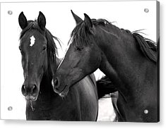 Best Buds Wild Mustang Acrylic Print by Rich Franco