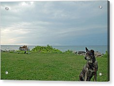 Best Friend Acrylic Print by Aimee L Maher Photography and Art Visit ALMGallerydotcom
