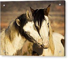 Acrylic Print featuring the photograph Best Friends 2009 by Joan Davis