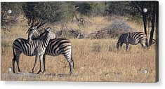 Best Friends Acrylic Print by Allan McConnell