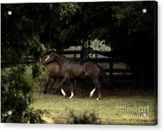 Best Friends Acrylic Print by Cris Hayes