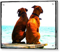 Best Friends Dog Photograph Fine Art Print Acrylic Print by Laura Carter