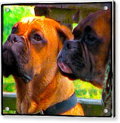 Best Friends Dog Photograph Acrylic Print by Laura Carter