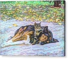 Best Friends Acrylic Print by Lilian F Norris