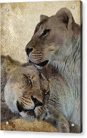 Best Friends Acrylic Print by Ron Grafe