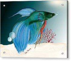 Beta Fish Acrylic Print