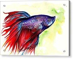 Beta Splendens Watercolor Fish Acrylic Print by Tiberiu Soos