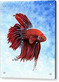 Betta-big Red Acrylic Print