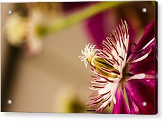 Acrylic Print featuring the photograph Better Days by Cathy Donohoue