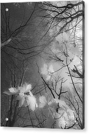 Between Black And White-02 Acrylic Print