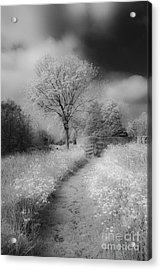 Between Black And White-23 Acrylic Print