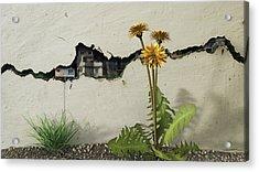 Between The Cracks Acrylic Print by Cynthia Decker