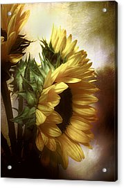 Between The Shadows Acrylic Print by John Rivera