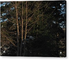Between The Trees Acrylic Print by Adam Smith