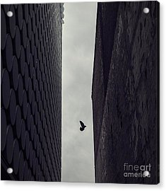 Between Worlds Acrylic Print by Andrew Paranavitana