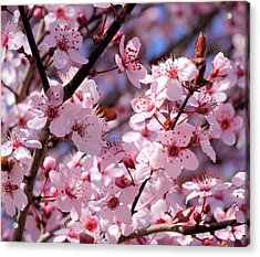 Bevy Of Blossoms Acrylic Print by Katherine White