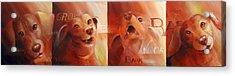 Beware Of Bark Acrylic Print by Vanessa Bates