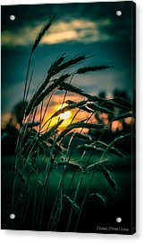 Acrylic Print featuring the photograph Beyond Expectations 2 by Michaela Preston