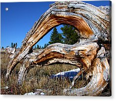 Beyond Our Roots Acrylic Print