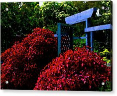 Beyond The Garden Gate Acrylic Print by James Temple