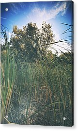Beyond The Grass Acrylic Print by Laurie Search