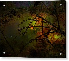Beyond The Thorns Acrylic Print by J Larry Walker