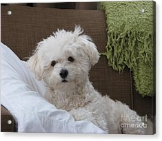 Molly 2 Acrylic Print by Michael Krek