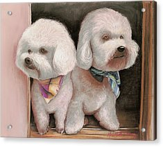 Acrylic Print featuring the painting Bichon Frise by Melinda Saminski