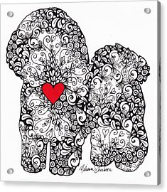Acrylic Print featuring the drawing Bichon Frise by Melissa Sherbon