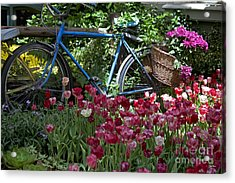 Bicycle In My Garden Acrylic Print