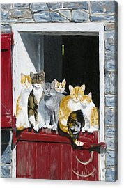 Biddles Barn Kitties Acrylic Print