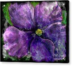 Big African Violet - Purple Flower - Steel Engraving Acrylic Print by Barbara Griffin