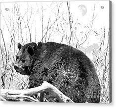 Big Bear In Black And White Acrylic Print
