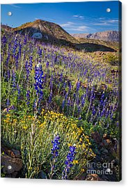 Big Bend Flower Meadow Acrylic Print by Inge Johnsson