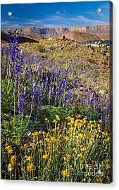 Big Bend Flowers Acrylic Print by Inge Johnsson