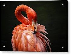 Big Bird Acrylic Print by Karol Livote