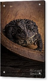 Big Black Toad Acrylic Print by Edward Fielding