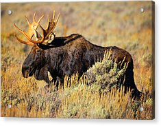 Acrylic Print featuring the photograph Big Boy by Greg Norrell