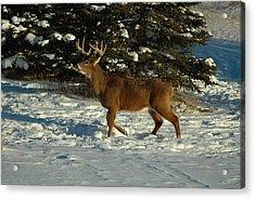 Big Boy In Early Winter Acrylic Print by Sandra Updyke