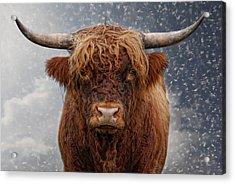 Big Bull Acrylic Print by Joachim G Pinkawa