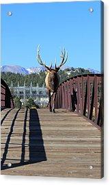 Big Bull On The Bridge Acrylic Print