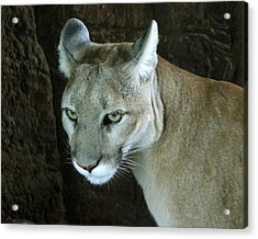 Acrylic Print featuring the photograph Big Cat by Rhonda McDougall