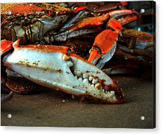 Big Crab Claw Acrylic Print