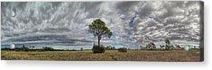 Big Cypress Acrylic Print