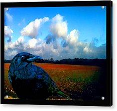 Big Daddy Crow Series Silent Watcher Acrylic Print