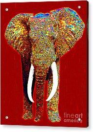 Big Elephant 20130201p0 Acrylic Print by Wingsdomain Art and Photography
