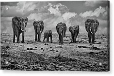 Big Family Acrylic Print by Marcel Rebro